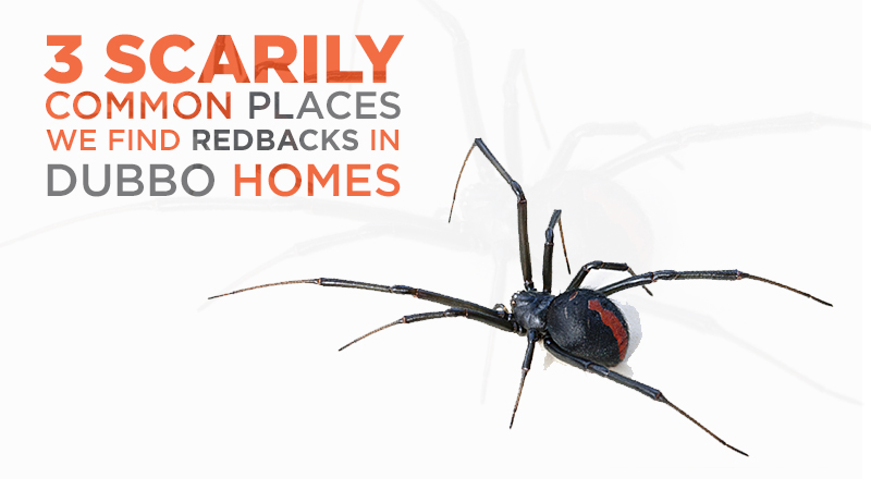 3 Scarily Common Places We Find Redbacks in Dubbo Homes