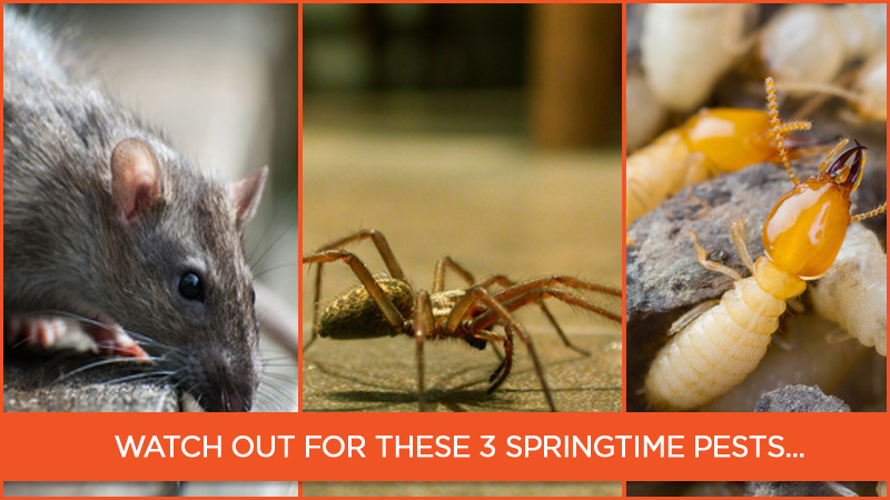 Watch Out For These 3 Springtime Pests