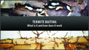 what is termite baiting