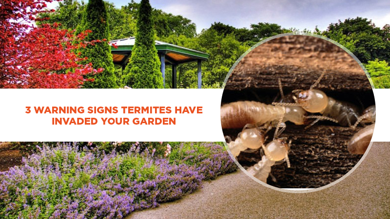 3 Warning Signs Termites Have Invaded Your Garden