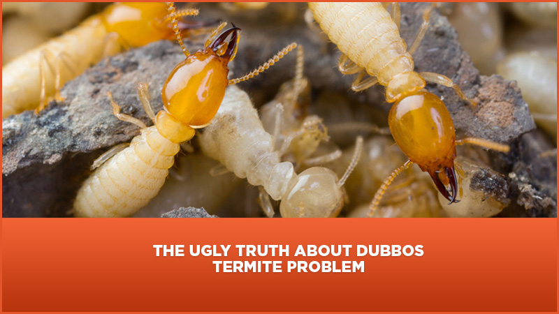 The Ugly Truth About Dubbo's Termite Problem