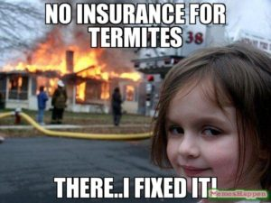 does insurance cover termite damage