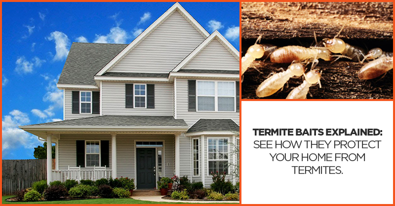 Termite baits explained: See how they protect your home from termites.