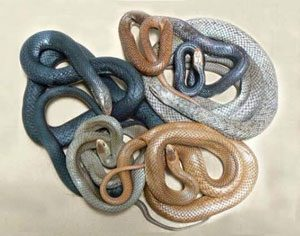 Dont judge a snake by its skin colour