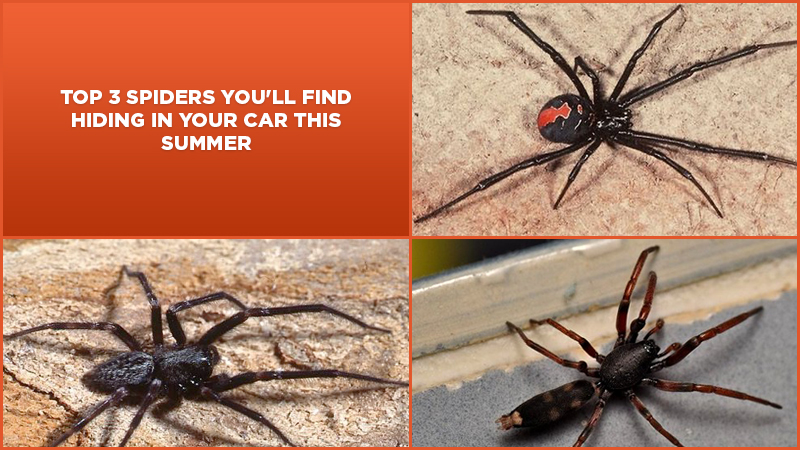 Top 3 Spiders You'll Find Hiding In Your Car This Summer