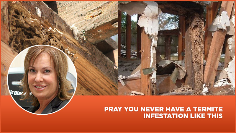Pray You Never Have A Termite Infestation Like This