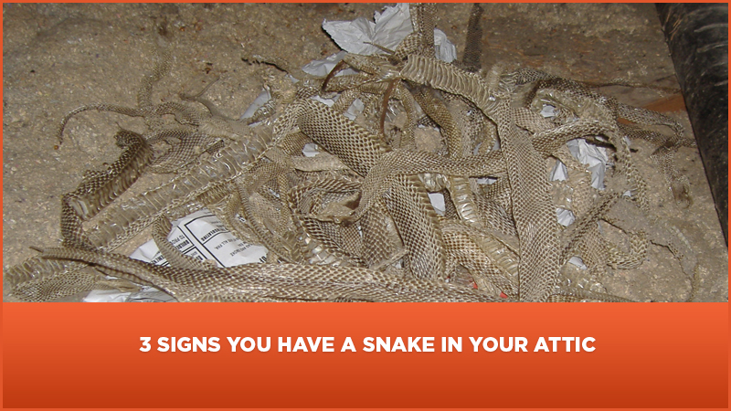 3 Signs You Have A Snake In Your Roof