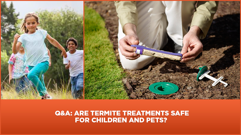 Are Termite Treatments Safe For Children And Pets?